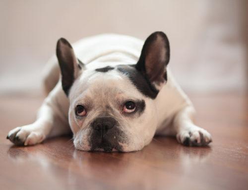 10 Terrible Dog Names
