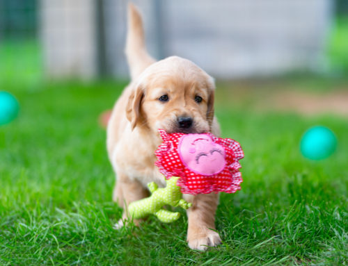 10 Toys That Your Dog Will Go Crazy Over