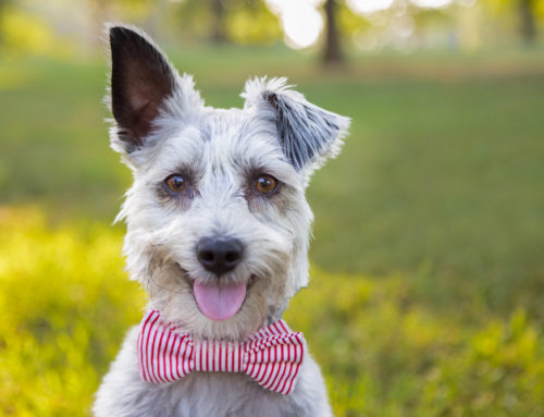 10 Funny Dog Names