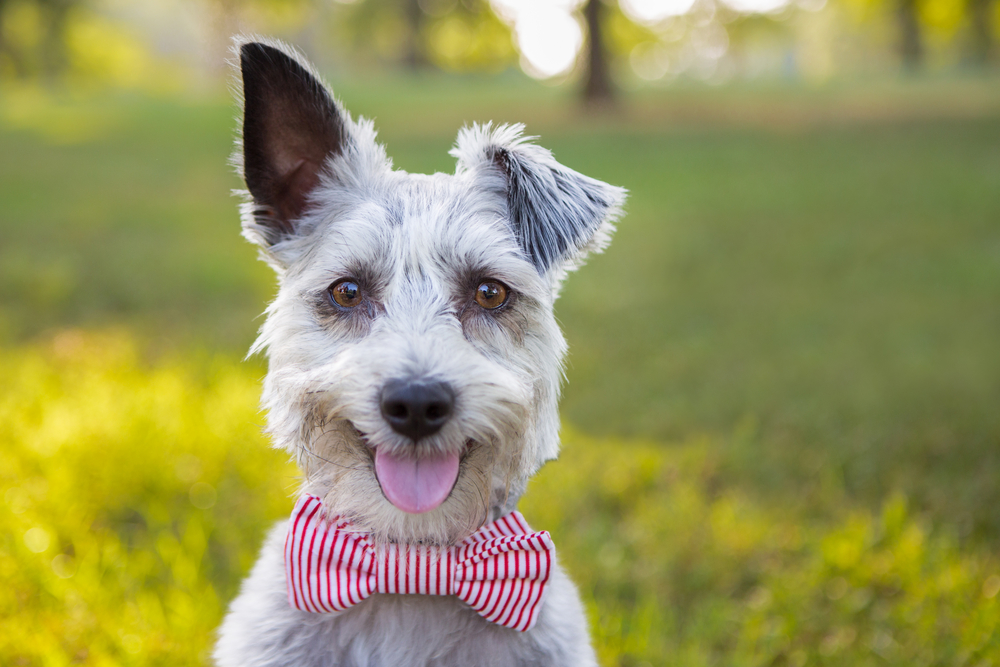 10 Funny Dog Names - Wagging Mongrel