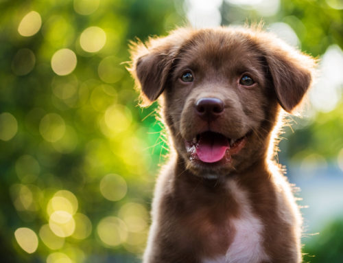 10 of the Most Popular Dog Names