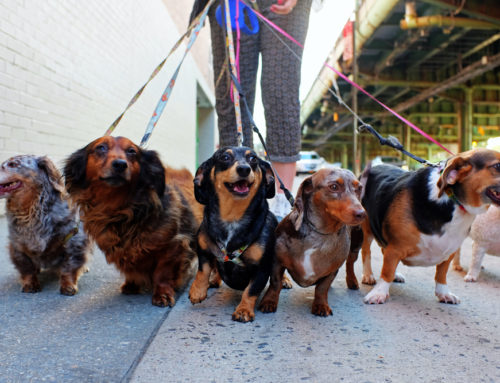 Tips For Training Your Dog to Walk on a Leash