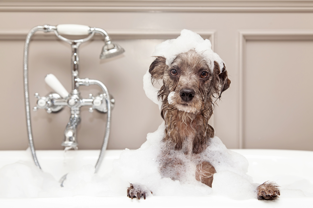 Can I Use Human Shampoo On My Dog? - Wagging Mongrel