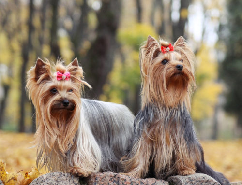 10 Great Name Ideas For Girl Dogs