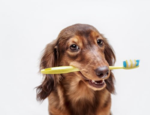 Should You Brush Your Dog's Teeth?