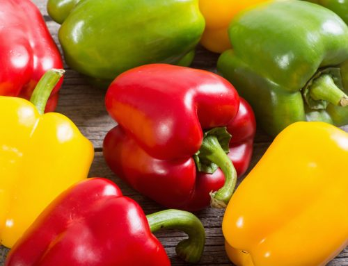 Can I Feed My Dog Bell Peppers?